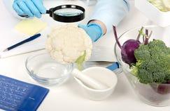 Ręki sprawdza kalafioru w phytocontrol laboratorium Obraz Stock
