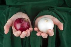 Ręki trzyma cebule Zdjęcie Royalty Free