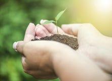 Ręki trzyma zielonego sapling Obraz Stock