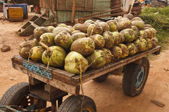 Rå kokosnötter Arkivbilder