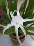 R kwiaty w kwiatów garnków kwiacie Fotografia Stock