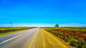 R39 Landstraße, eine der vielen geraden Straßen in Südafrika, zwischen den Städten Ermelo und Standarton in Mpumalanga Lizenzfreies Stockbild