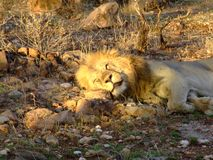 R??norodni zwierz?ta w Africa na safari w Kenya fotografia royalty free