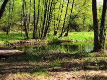 R?o en el bosque foto de archivo