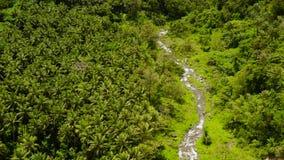 R?o que fluye en la selva de la monta?a, Filipinas, Camiguin metrajes