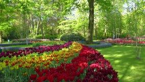 r??owi czerwoni tulipany zbiory