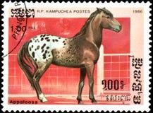 r P 柬埔寨-大约1986年:在R打印的邮票 P 柬埔寨显示一匹阿帕卢萨马马 免版税图库摄影