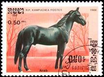 r P 柬埔寨-大约1986年:在R打印的邮票 P 柬埔寨显示一匹阿拉伯马 免版税库存图片