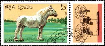 r P CAMBODJA - CIRCA 1989: Een zegel in R wordt gedrukt dat P Cambodja toont een Bolounais-Paard, reeksrassen paarden Stock Foto