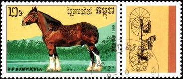 r P CAMBODJA - CIRCA 1989: Een zegel in R wordt gedrukt dat P Cambodja toont een Graafschappaard, reeksrassen paarden Royalty-vrije Stock Foto