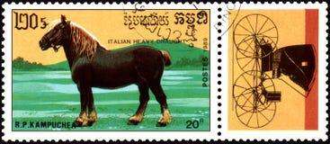 r P CAMBODJA - CIRCA 1989: Een zegel in R wordt gedrukt dat P Cambodja toont een Italiaans zwaar trekkingspaard Royalty-vrije Stock Fotografie