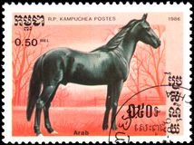 R.P. KAMPUCHEA - CIRCA 1986: A stamp printed in R.P. Kampuchea shows a Arabian Horse Royalty Free Stock Image