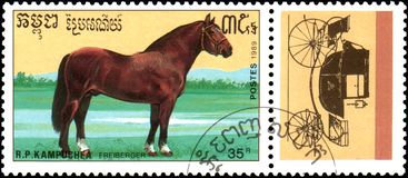 R.P. KAMPUCHEA - CIRCA 1989: A stamp printed in R.P. Kampuchea shows a Freiberger horse, series breeds of horses. R.P. KAMPUCHEA - CIRCA 1989: A stamp printed in royalty free stock photography