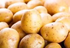 rå potatisar Arkivbilder