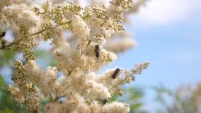 r różnorodni insekty zbierają nektar od kwitnących żółtych kwiatów zbiory