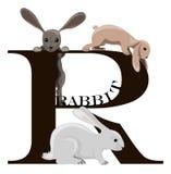 R (rabbit) stock photo