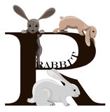 R (rabbit) vector illustration