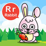 R Rabbit color cartoon and alphabet for children to learning vec Royalty Free Stock Image