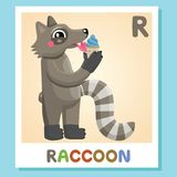 R is for Raccoon. Letter R. Raccoon., cute illustration. Animal alphabet. R is for Raccoon. Letter R. Raccoon., cute funny illustration Animal alphabet Stock Images