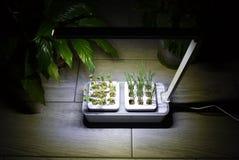 R roślinę w domu Dodatek specjalny puszkuje dla narastających ziele, rośliny, kwiaty w domu Szczegóły i makro- photography//, w g obrazy stock