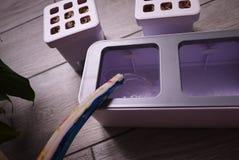 R roślinę w domu Dodatek specjalny puszkuje dla narastających ziele, rośliny, kwiaty w domu Szczegóły i makro- photography//, w g fotografia stock