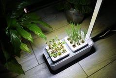 R roślinę w domu Dodatek specjalny puszkuje dla narastających ziele, rośliny, kwiaty w domu Szczegóły i makro- photography//, w g zdjęcia royalty free