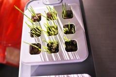 R roślinę w domu Dodatek specjalny puszkuje dla narastających ziele, rośliny, kwiaty w domu Szczegóły i makro- photography//, w g zdjęcie royalty free