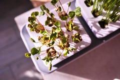 R roślinę w domu Dodatek specjalny puszkuje dla narastających ziele, rośliny, kwiaty w domu Szczegóły i makro- photography//, w g obraz royalty free