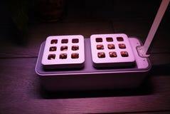 R roślinę w domu Dodatek specjalny puszkuje dla narastających ziele, rośliny, kwiaty w domu Szczegóły i makro- photography//, w g zdjęcie stock