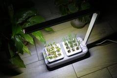 R roślinę w domu Dodatek specjalny puszkuje dla narastających ziele, rośliny, kwiaty w domu Szczegóły i makro- photography//, w g fotografia royalty free