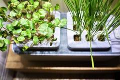 R roślinę w domu Dodatek specjalny puszkuje dla narastających ziele, rośliny, kwiaty w domu Szczegóły i makro- photography//, w g obraz stock