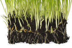 r roślinę wiosny gleby fotografia royalty free