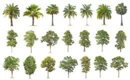 r Stora träd växer i sommar som gör fotografering för bildbyråer