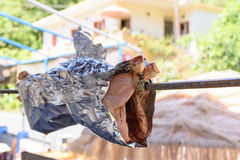 Rôti fait maison de poulet sur une broche dans un barbecue dans la rue Image stock