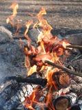 Rôtissez les saucisses au-dessus d'un feu dans le sauvage Photo stock