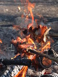 Rôtissez les saucisses au-dessus d'un feu dans le sauvage Photographie stock