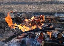 Rôtissez les saucisses au-dessus d'un feu dans le sauvage Images stock