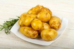 R? ung potatis royaltyfri bild