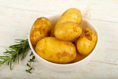 R? ung potatis fotografering för bildbyråer
