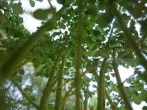 R up mój rośliny Obrazy Stock