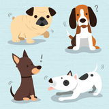 Raça bonito dos cães Imagens de Stock Royalty Free