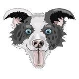 Raça border collie da cara do cão ilustração do vetor
