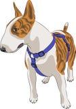Raça bull terrier do cão do vetor Foto de Stock Royalty Free