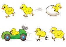 Raça da galinha Imagem de Stock
