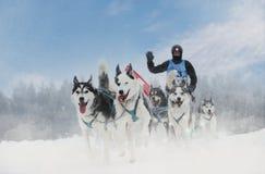 A raça de cão de trenó do inverno na paisagem maravilhosa do inverno no fundo é cães de guia borrados Competência de cão do trenó fotografia de stock