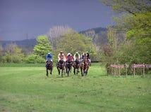 Raça de cavalo Foto de Stock