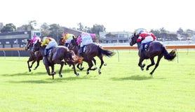 Raça de cavalo Fotos de Stock Royalty Free