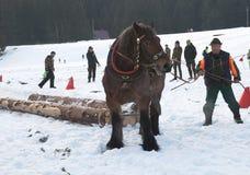 Raça de cavalos do esboço Imagem de Stock