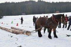 Raça de cavalos do esboço Imagens de Stock