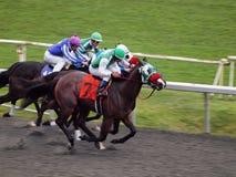 Raça de cavalos para a terminar-linha corredor Fotografia de Stock Royalty Free